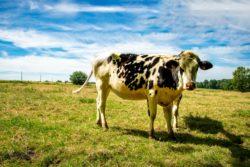 rezygnacja z mięsa a klimat